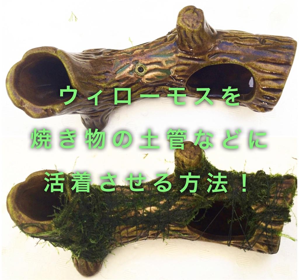 f:id:yumemiraitunagu:20191204155427j:image