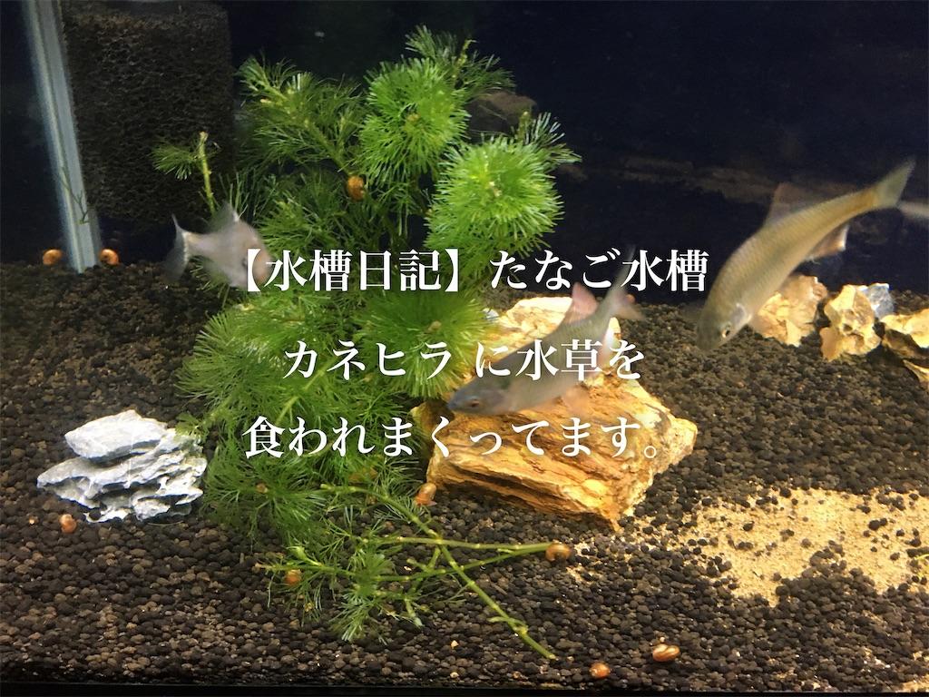 f:id:yumemiraitunagu:20191210214327j:plain