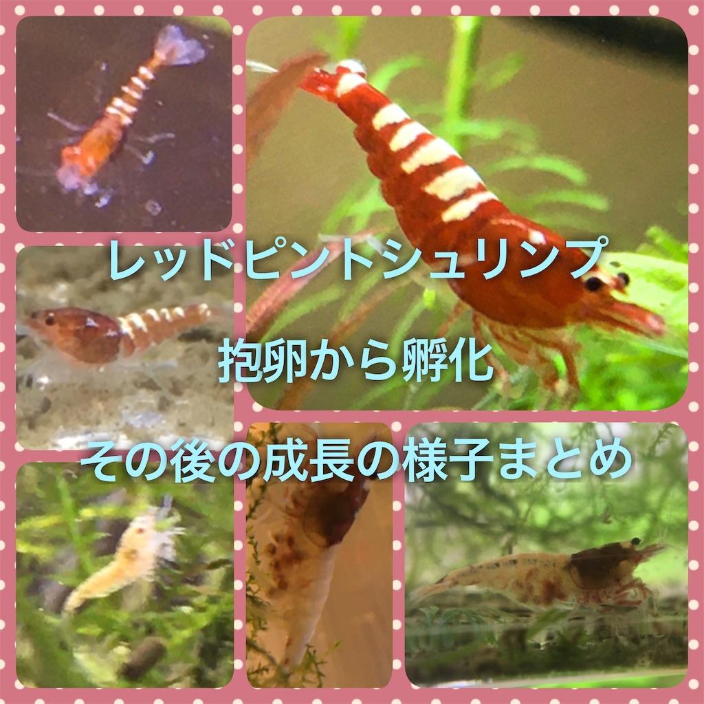 f:id:yumemiraitunagu:20191212150018j:plain