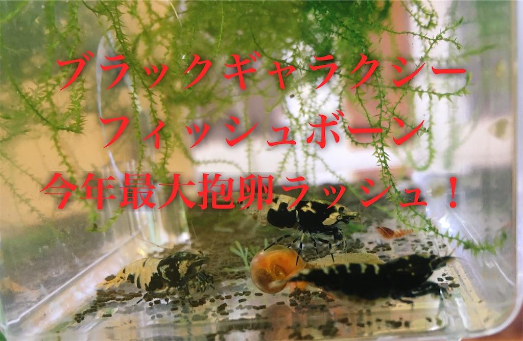 f:id:yumemiraitunagu:20191231030531j:plain