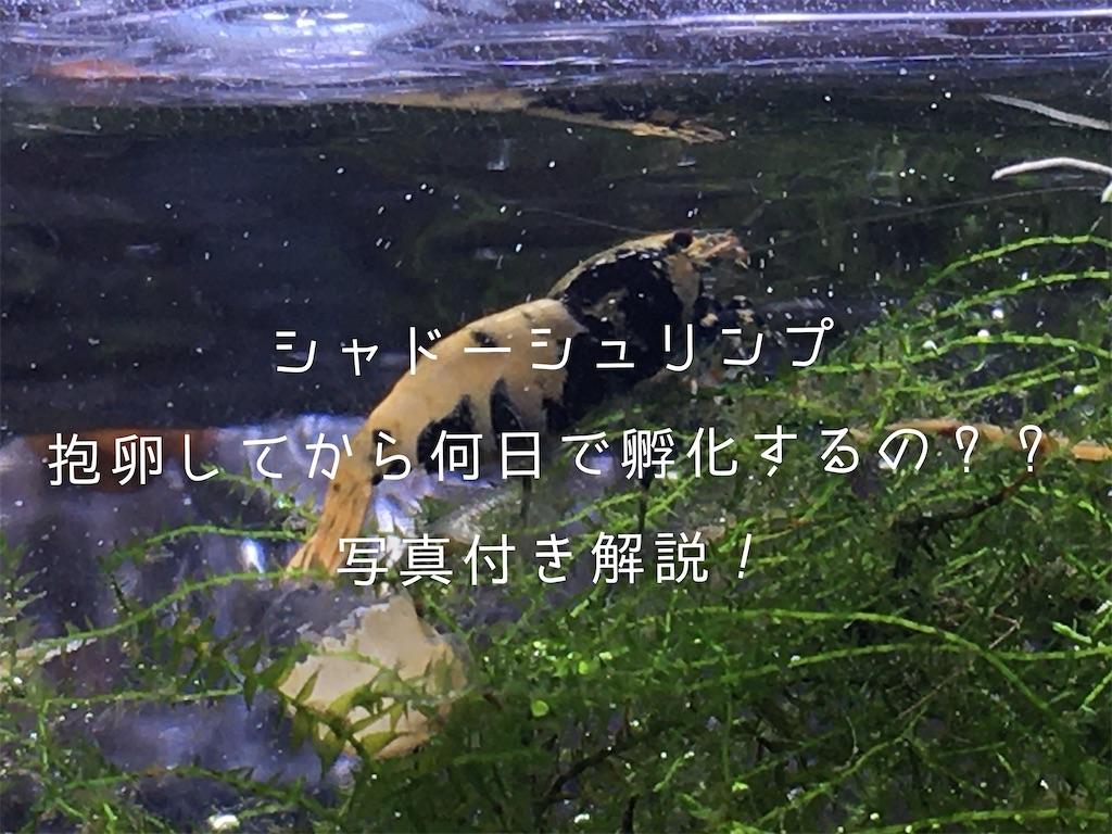 f:id:yumemiraitunagu:20200101162109j:plain