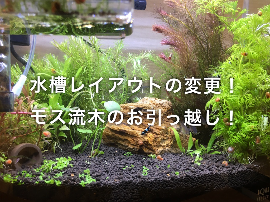 f:id:yumemiraitunagu:20200107182254j:plain