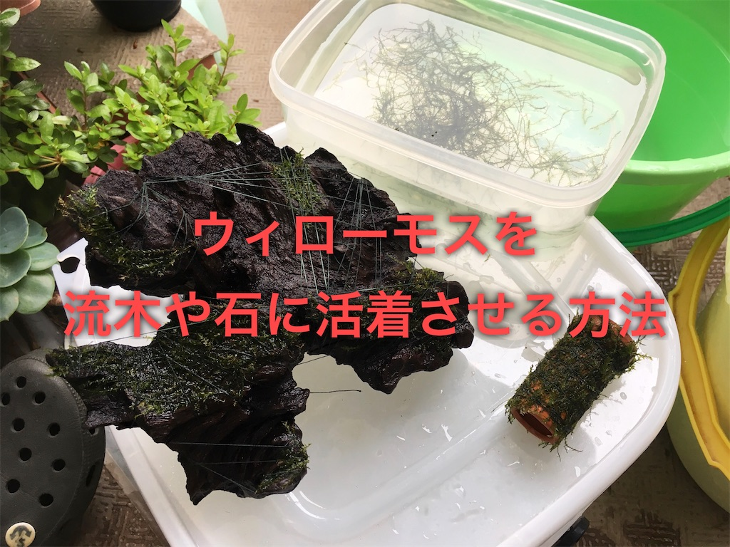 f:id:yumemiraitunagu:20200108020557j:plain