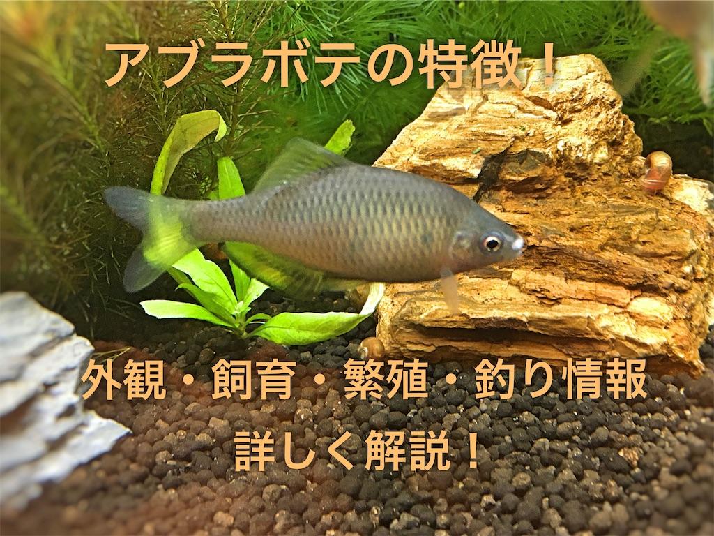 f:id:yumemiraitunagu:20200109031740j:plain