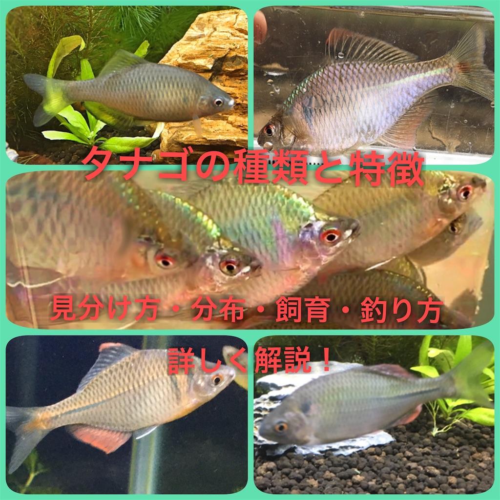 f:id:yumemiraitunagu:20200109044059j:plain