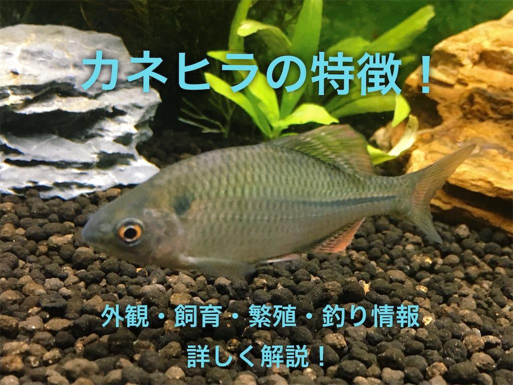 f:id:yumemiraitunagu:20200109192657j:plain