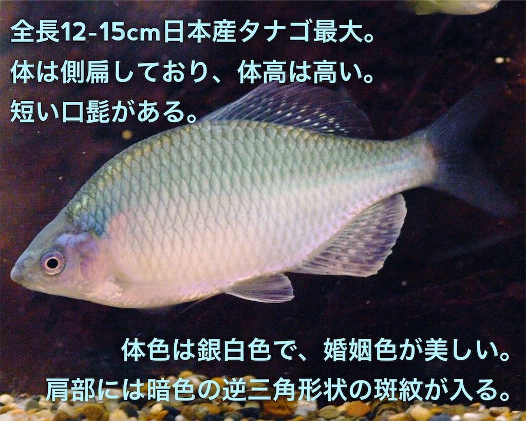 f:id:yumemiraitunagu:20200109193516j:plain