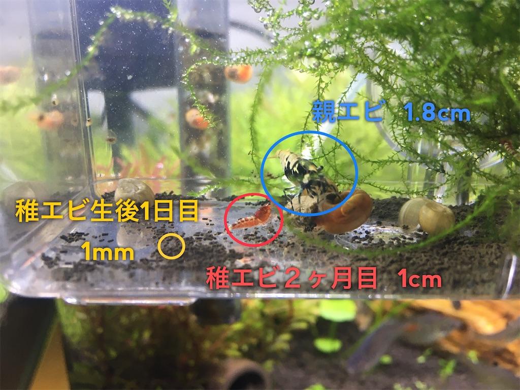 f:id:yumemiraitunagu:20200115140905j:plain