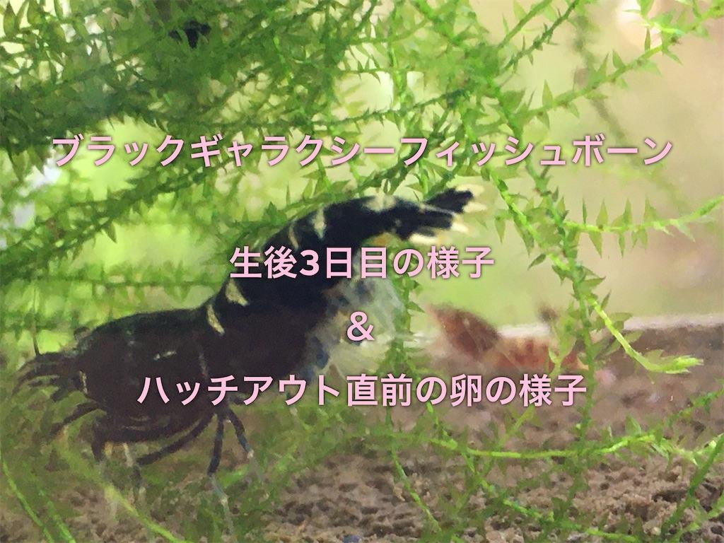 f:id:yumemiraitunagu:20200118155245j:plain