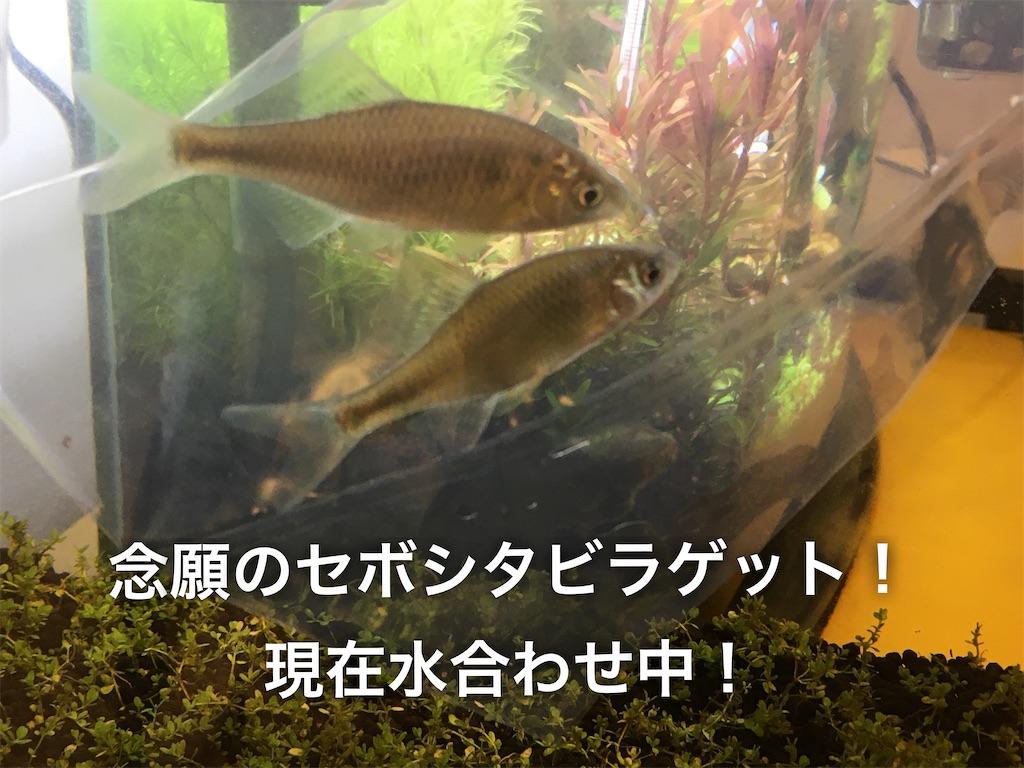 f:id:yumemiraitunagu:20200122172752j:plain
