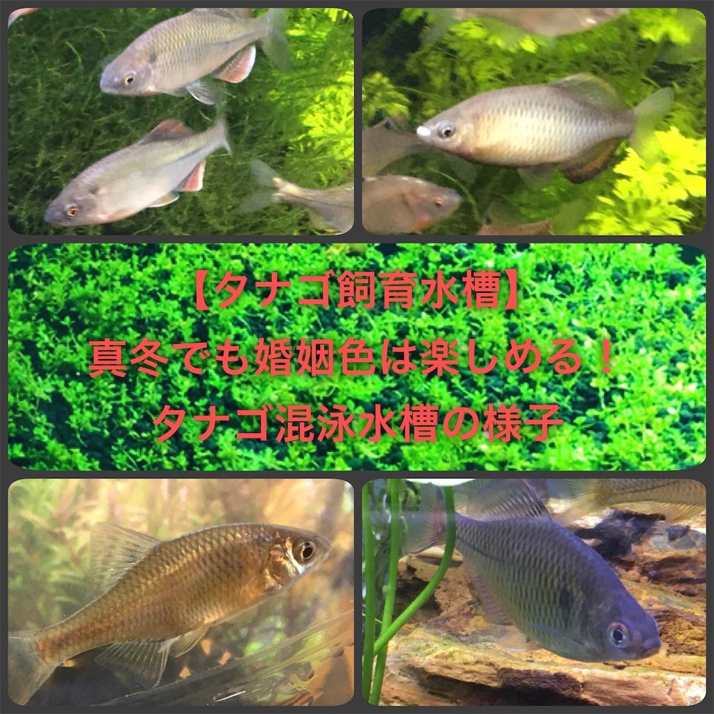 f:id:yumemiraitunagu:20200128181347j:plain