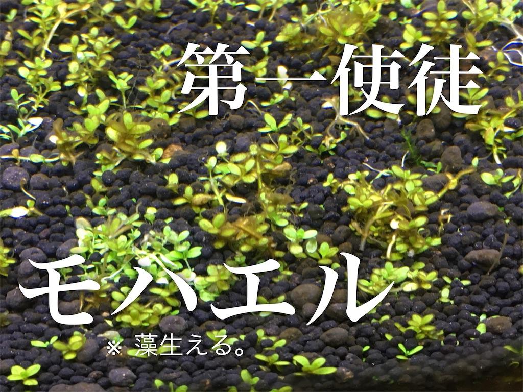 f:id:yumemiraitunagu:20200131194641j:plain