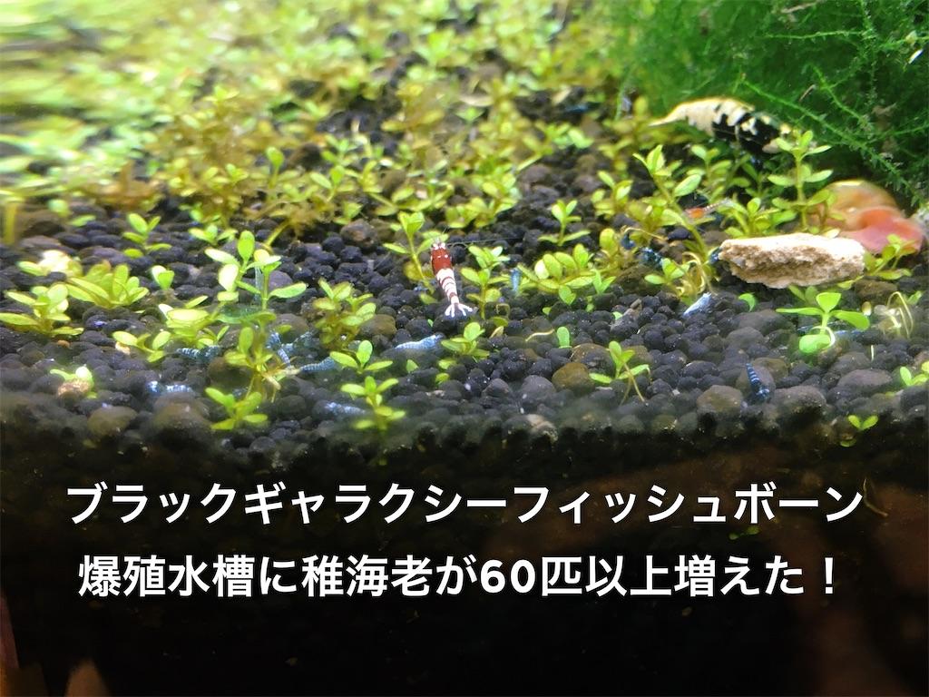 f:id:yumemiraitunagu:20200209024813j:plain