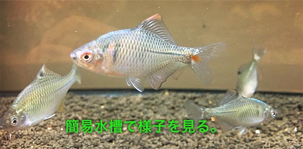 f:id:yumemiraitunagu:20200218034024j:plain