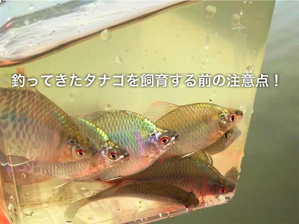f:id:yumemiraitunagu:20200218034630j:plain