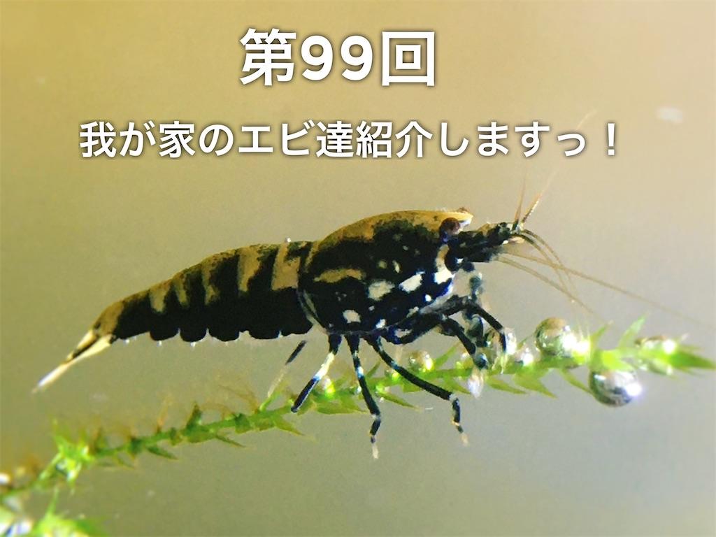 f:id:yumemiraitunagu:20200222120817j:plain