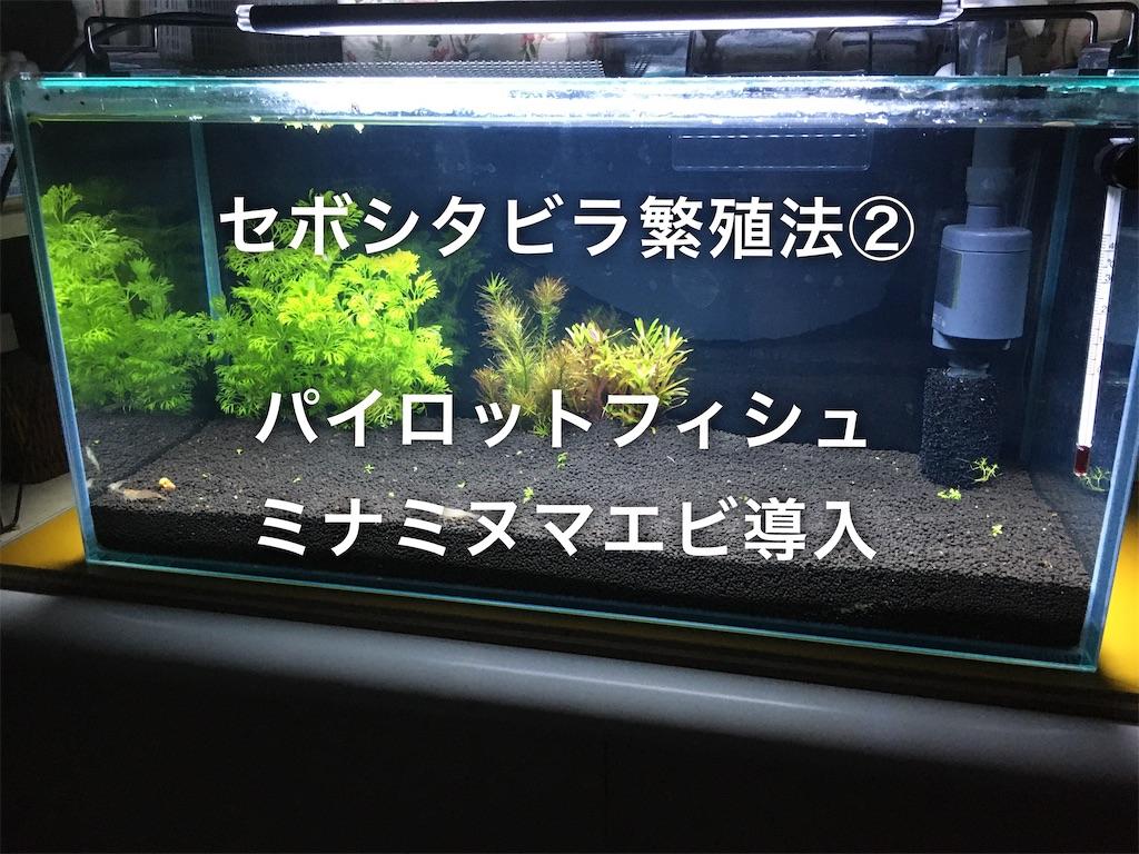 f:id:yumemiraitunagu:20200226081126j:plain
