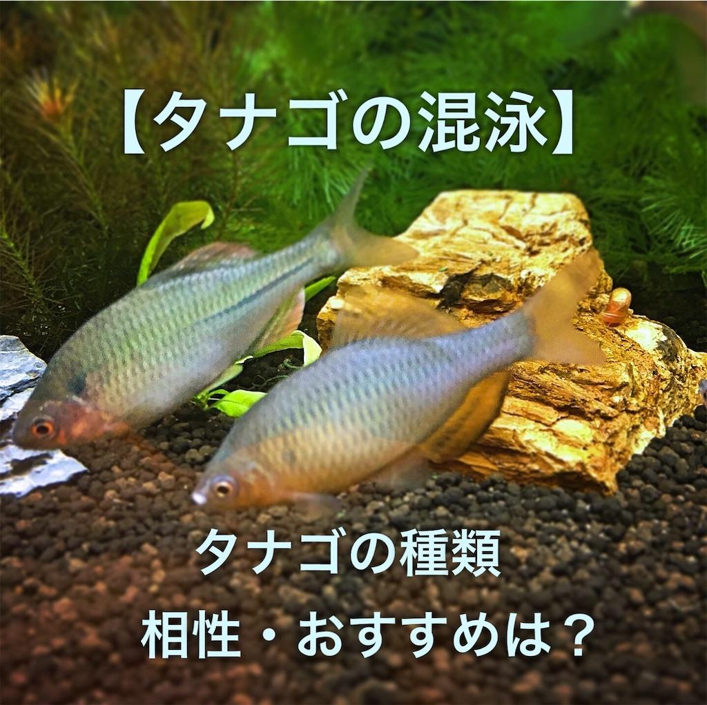 f:id:yumemiraitunagu:20200227094306j:plain