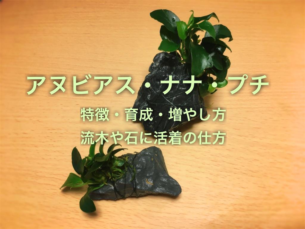 f:id:yumemiraitunagu:20200304174826j:plain