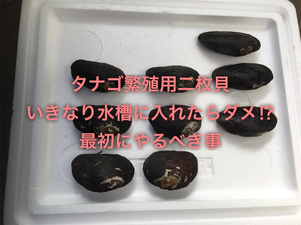 f:id:yumemiraitunagu:20200311204727j:plain