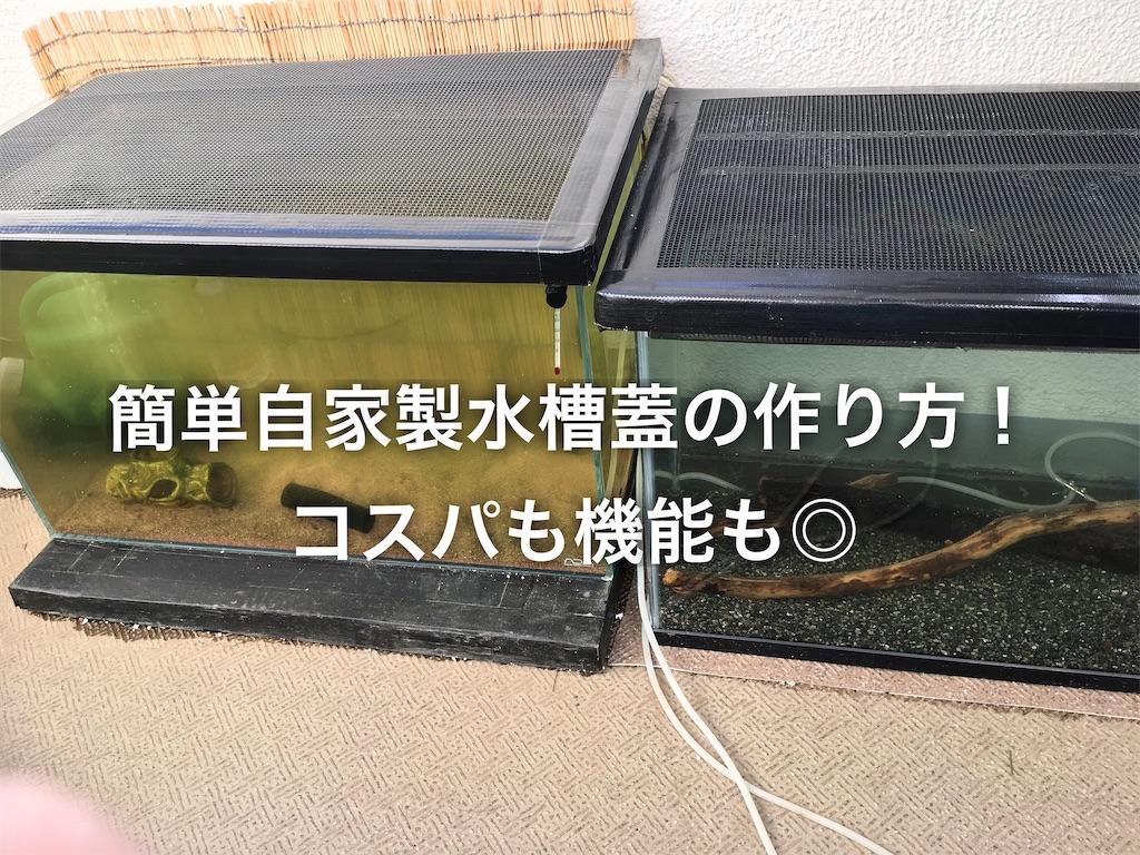 f:id:yumemiraitunagu:20200312172223j:image