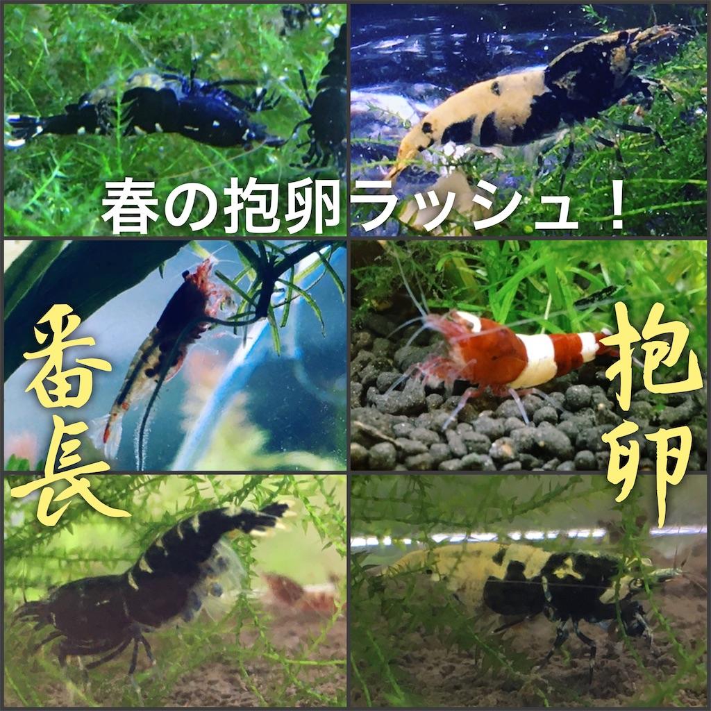 f:id:yumemiraitunagu:20200313181721j:plain