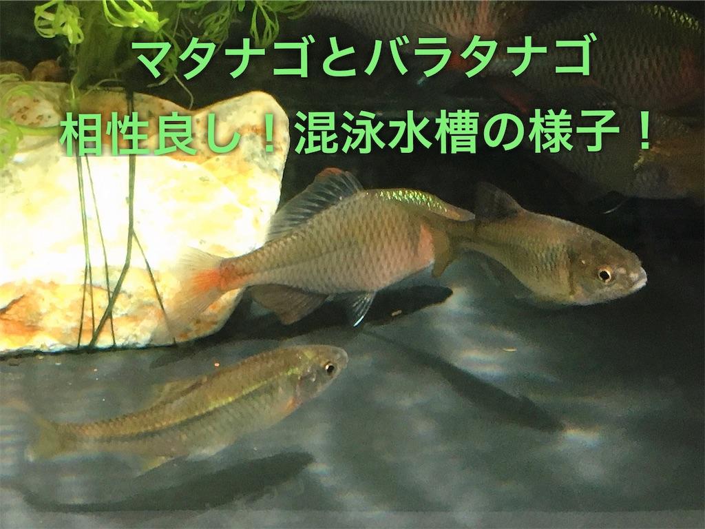 f:id:yumemiraitunagu:20200317061148j:plain
