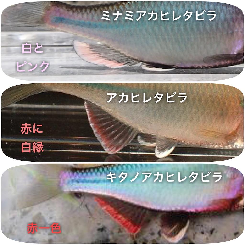 f:id:yumemiraitunagu:20200317233059j:plain