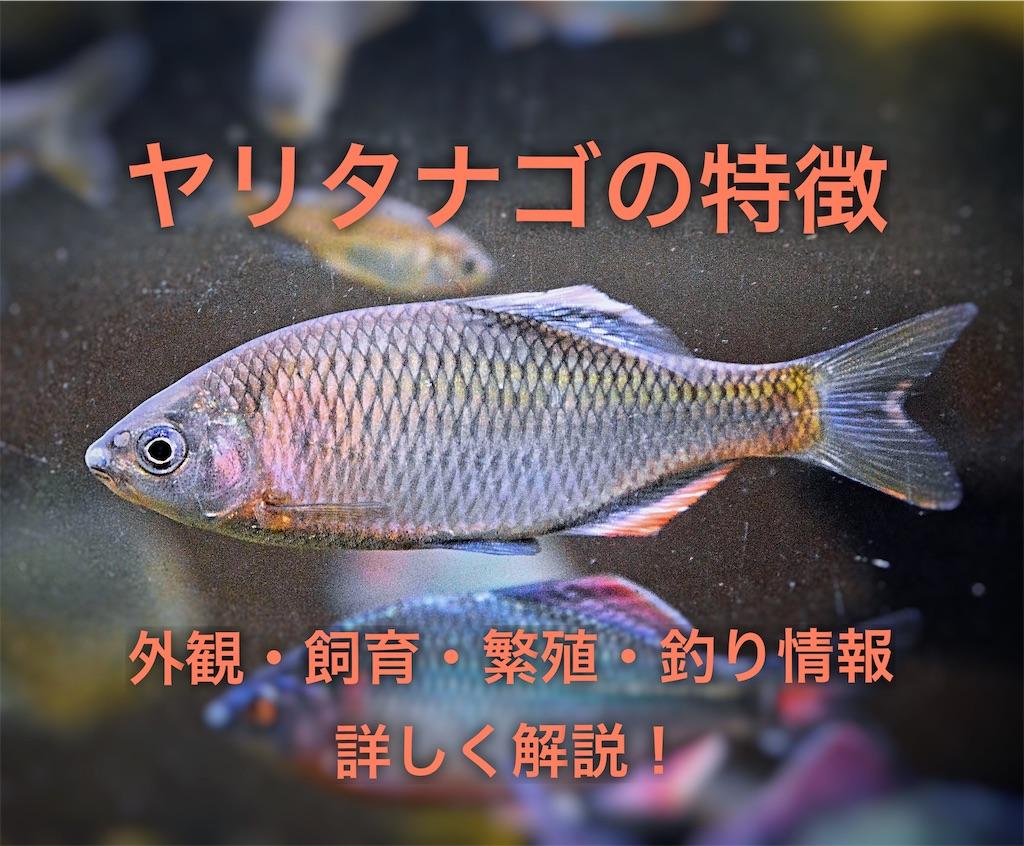f:id:yumemiraitunagu:20200320021121j:plain