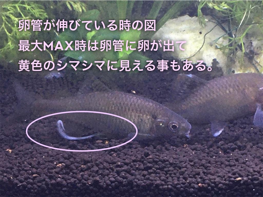 f:id:yumemiraitunagu:20200323173340j:plain