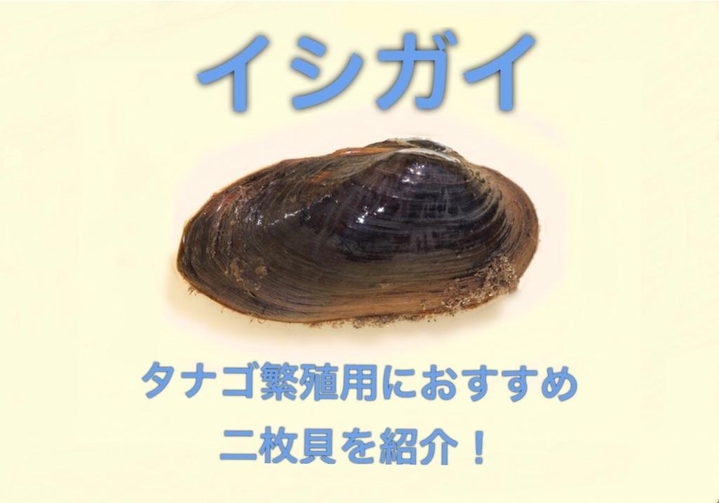 f:id:yumemiraitunagu:20200325085500j:plain