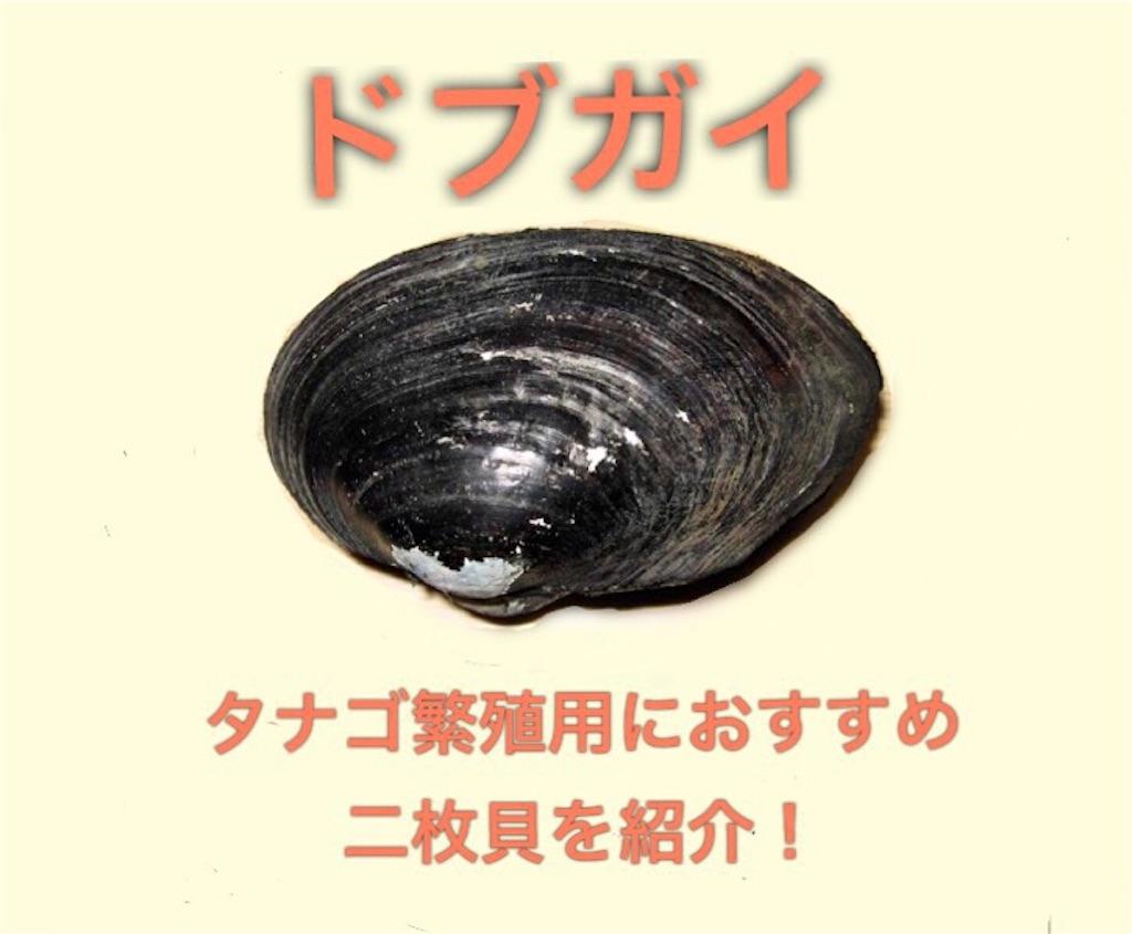 f:id:yumemiraitunagu:20200325102559j:plain