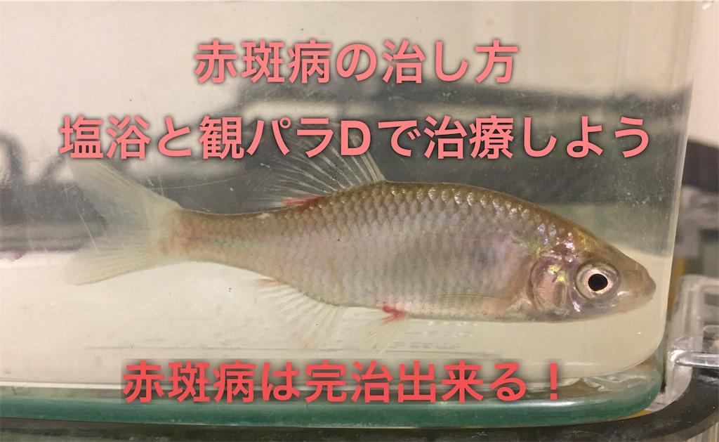f:id:yumemiraitunagu:20200325103129j:plain