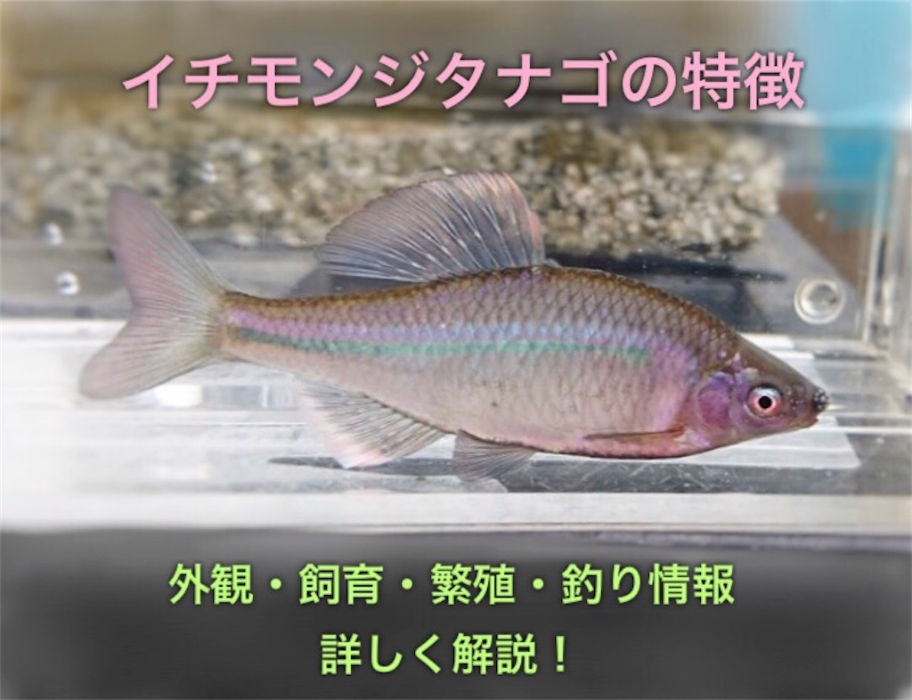 f:id:yumemiraitunagu:20200325175708j:plain