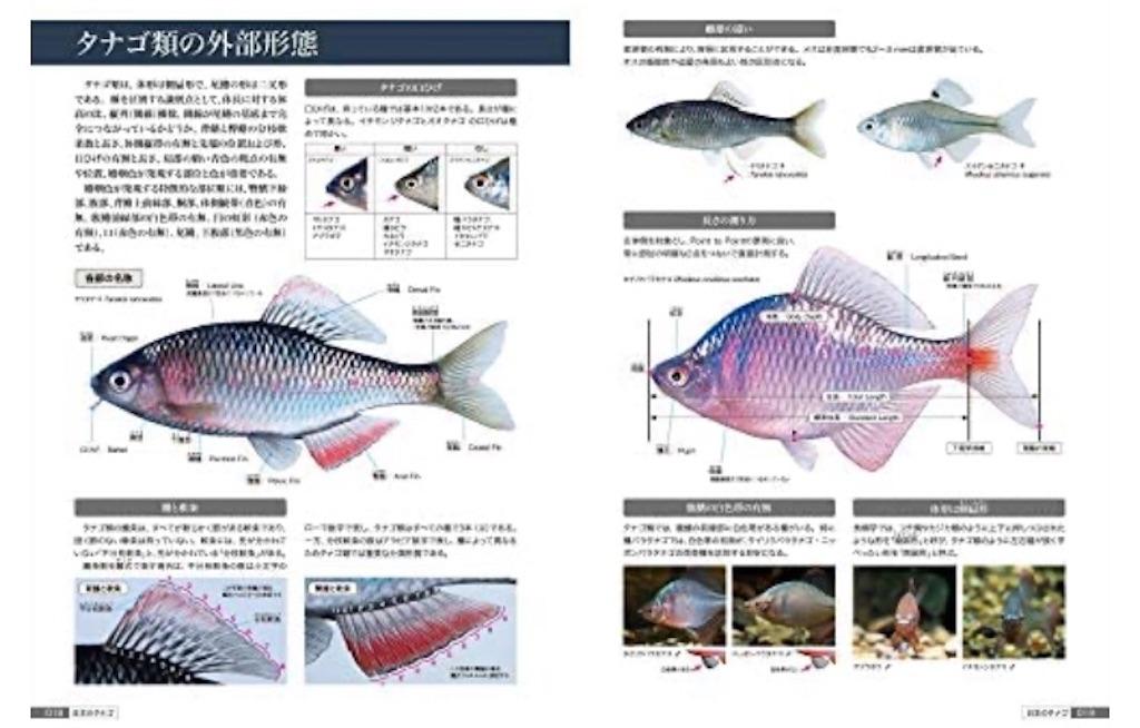 f:id:yumemiraitunagu:20200327064908j:plain