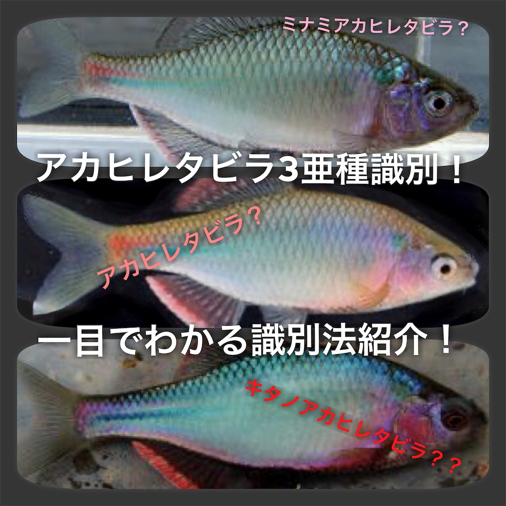 f:id:yumemiraitunagu:20200327153827j:plain