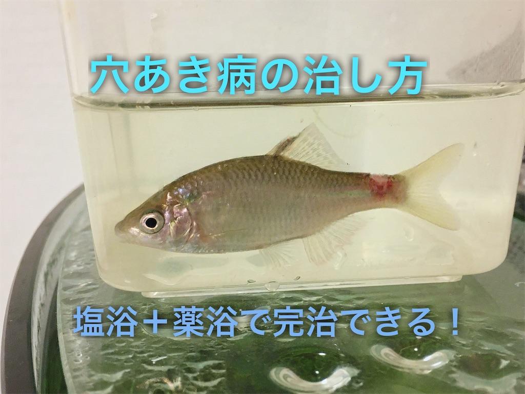 f:id:yumemiraitunagu:20200402171201j:plain