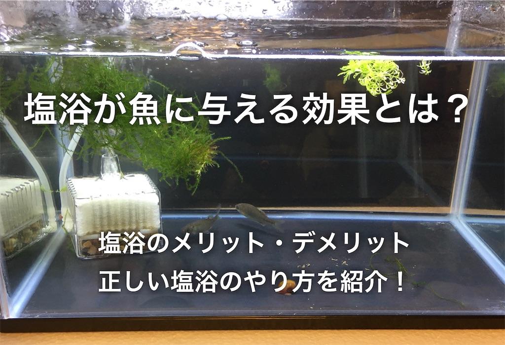f:id:yumemiraitunagu:20200402231218j:plain