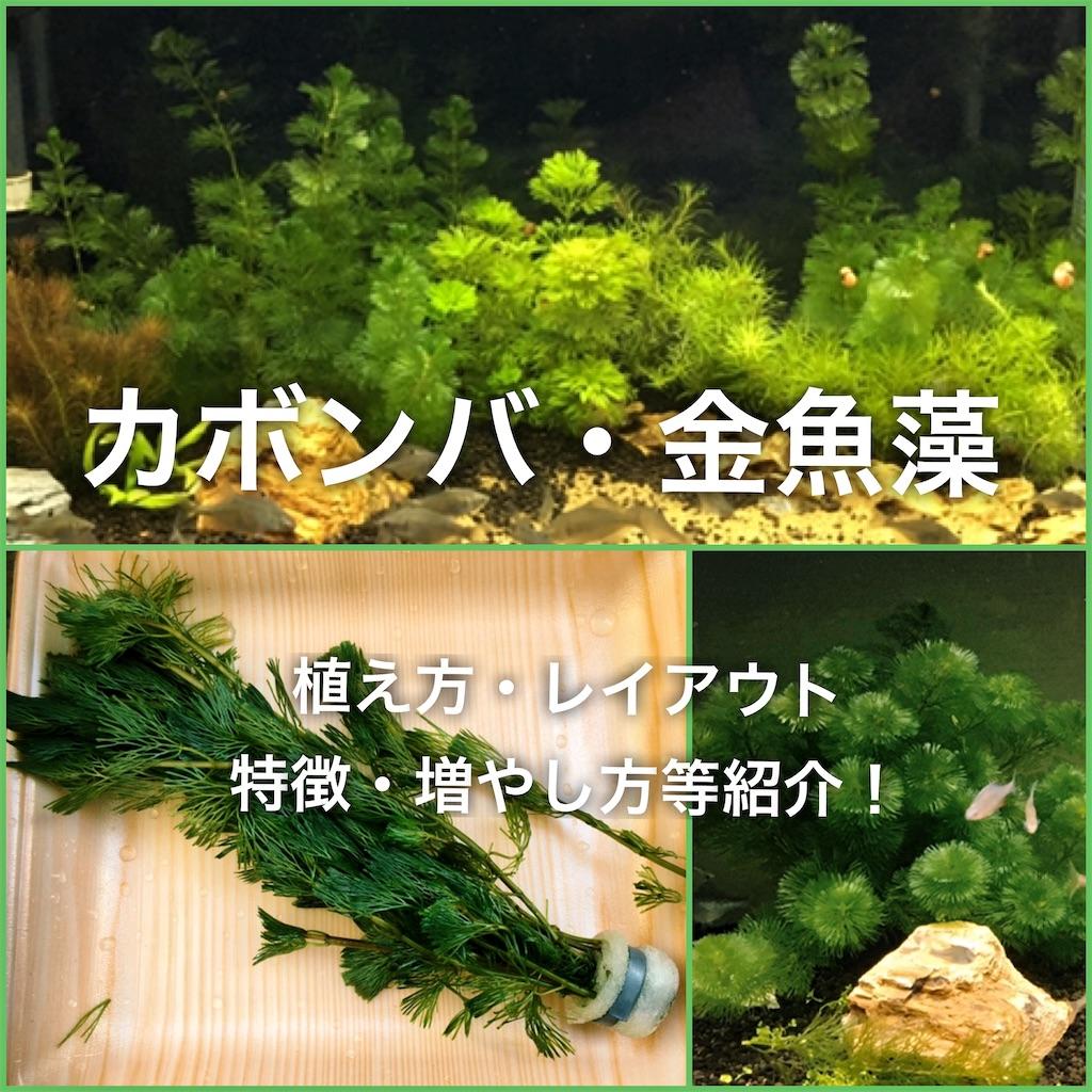 f:id:yumemiraitunagu:20200404203503j:plain