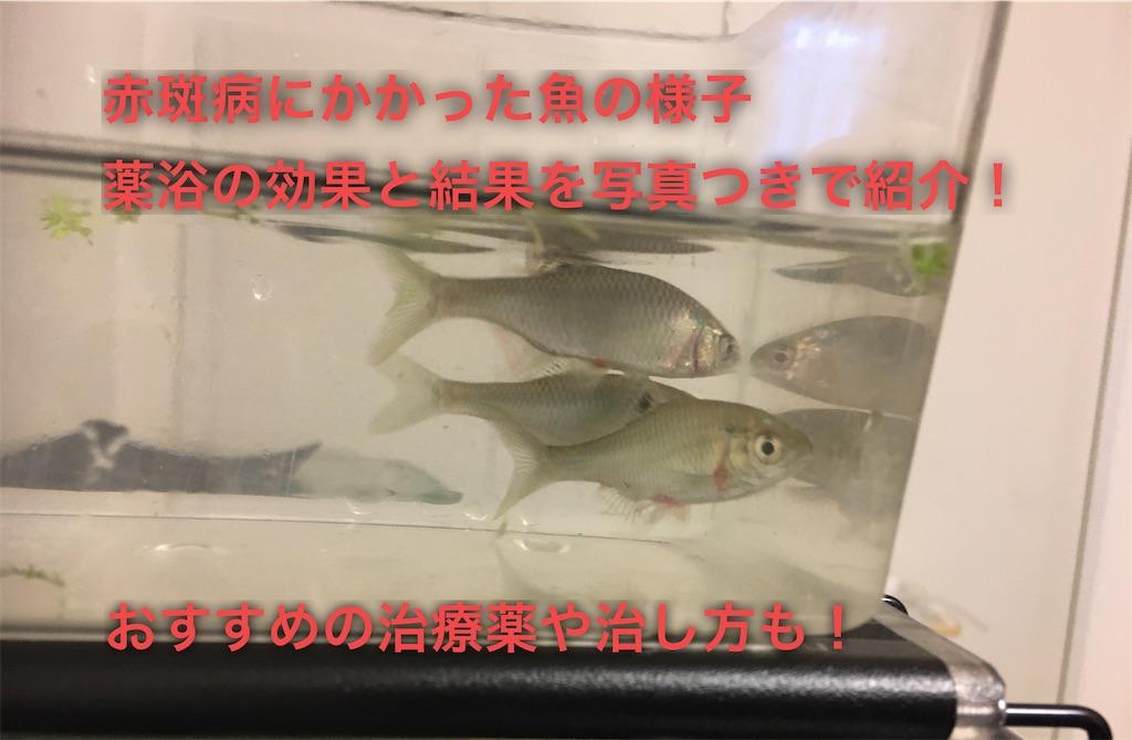 f:id:yumemiraitunagu:20200406020739j:plain