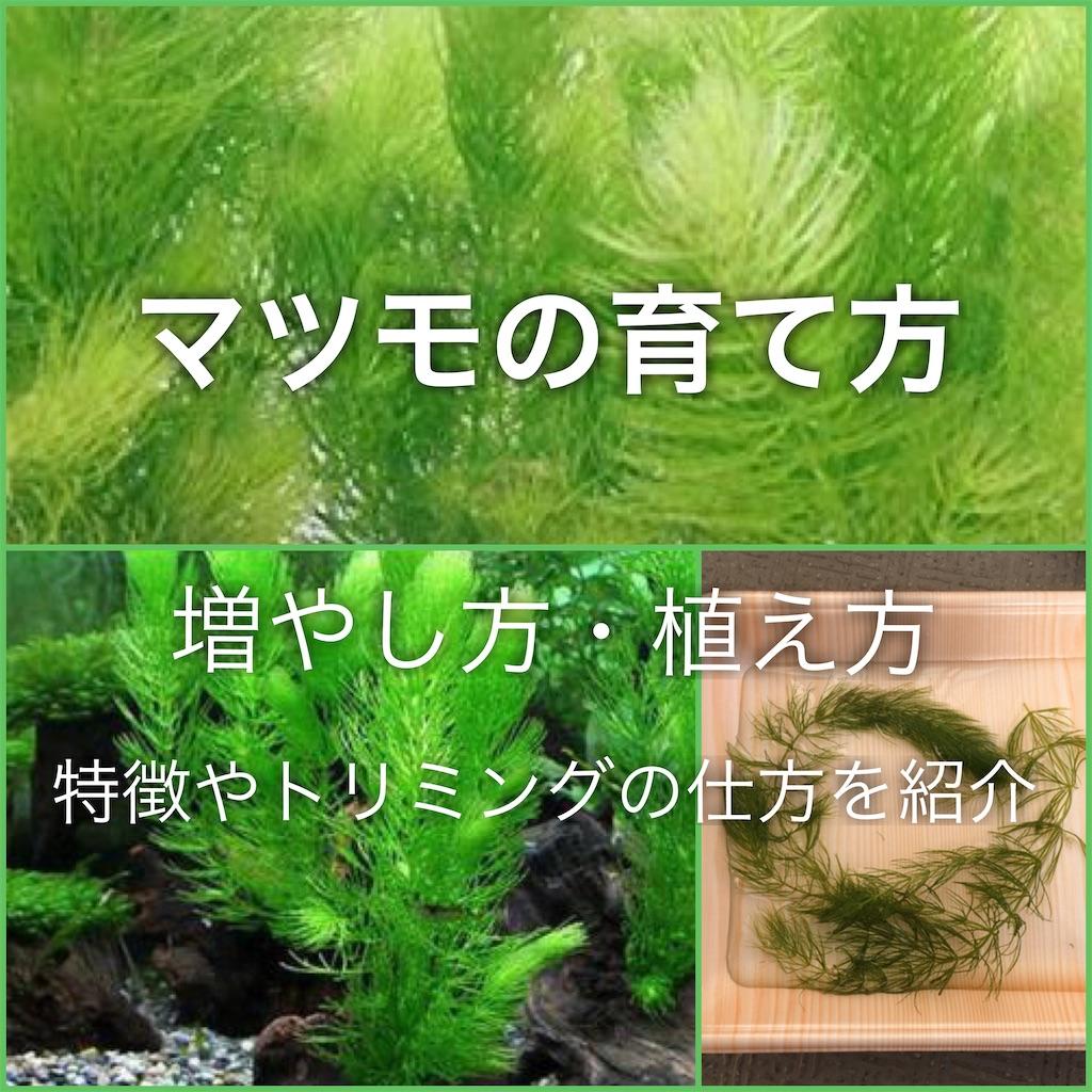 f:id:yumemiraitunagu:20200409023042j:plain