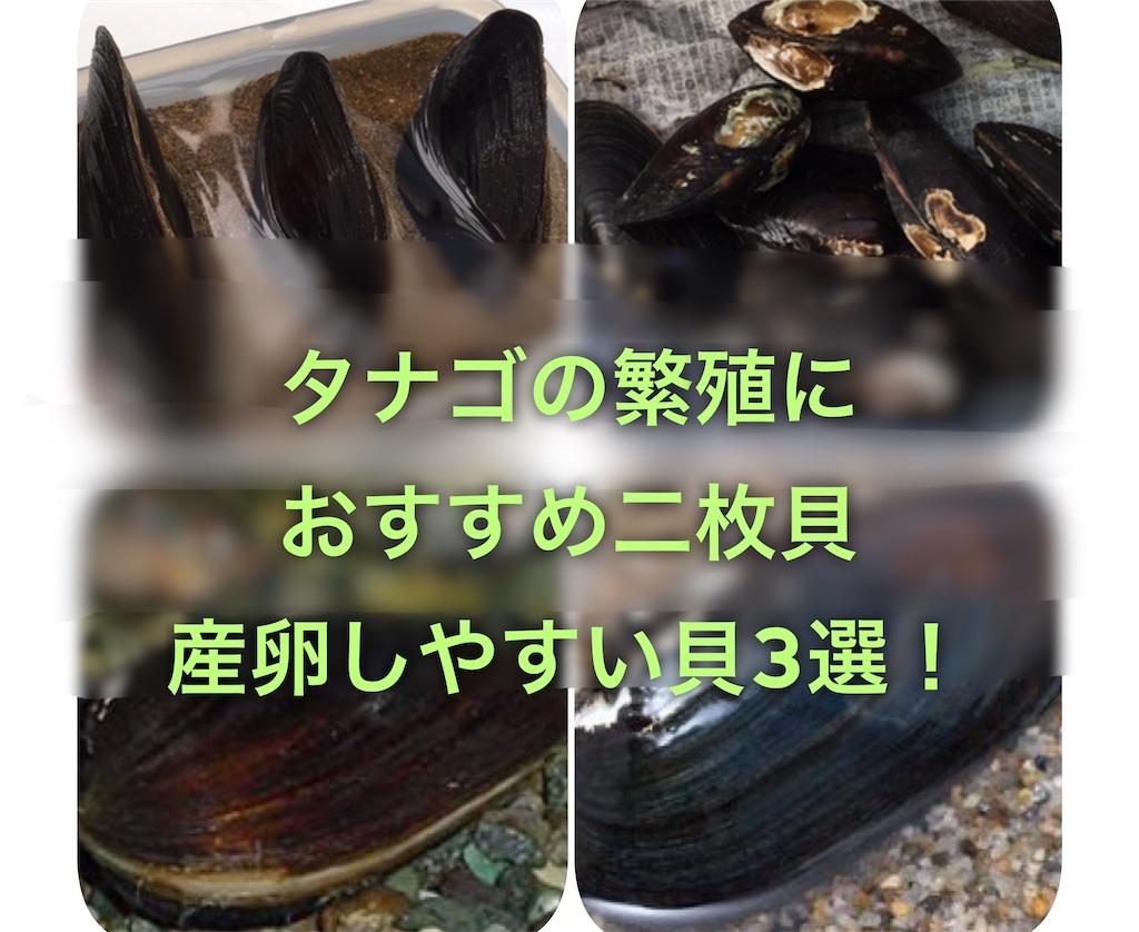 f:id:yumemiraitunagu:20200410030853j:plain