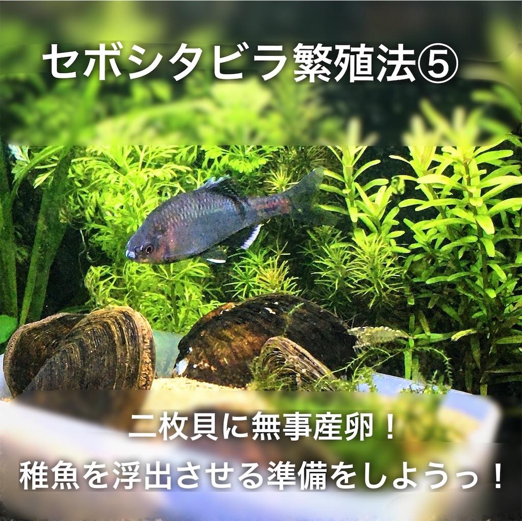 f:id:yumemiraitunagu:20200411030518j:plain