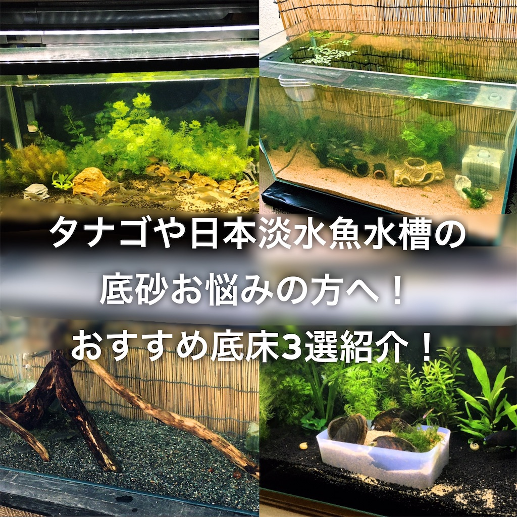 f:id:yumemiraitunagu:20200411145227j:plain