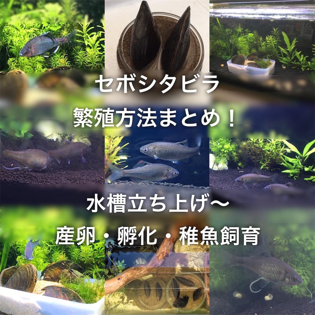 f:id:yumemiraitunagu:20200414021335j:plain