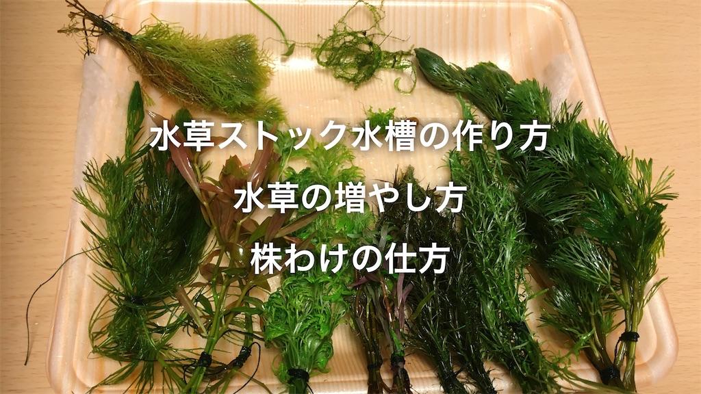 f:id:yumemiraitunagu:20200418050711j:plain
