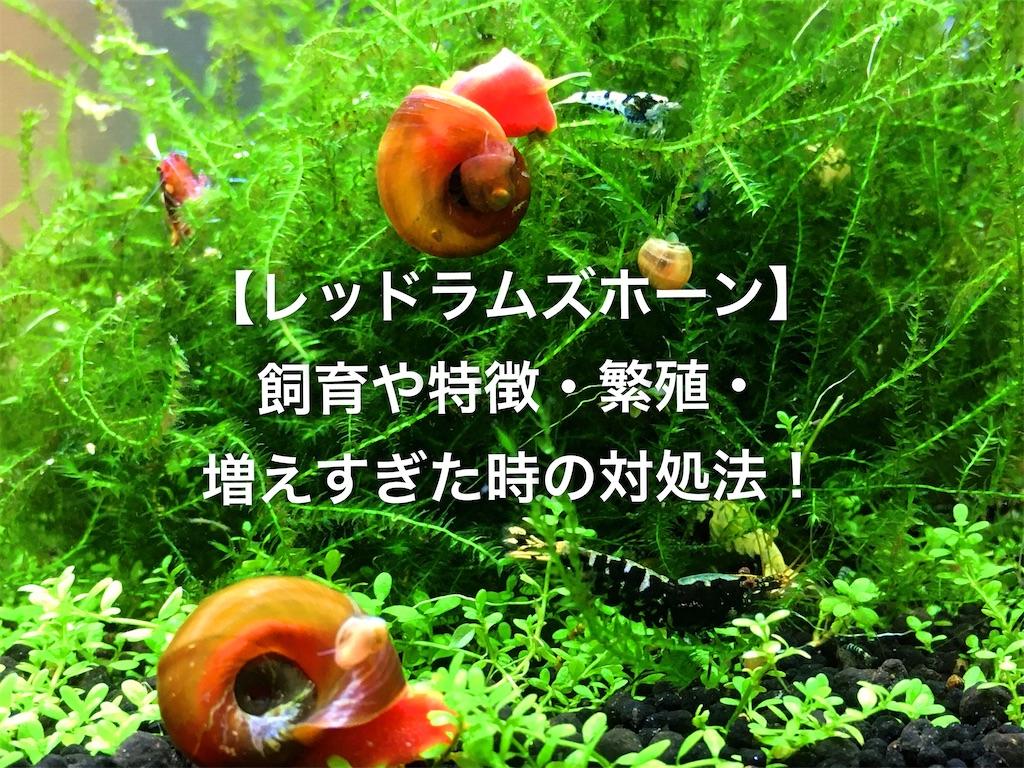 f:id:yumemiraitunagu:20200419061503j:plain