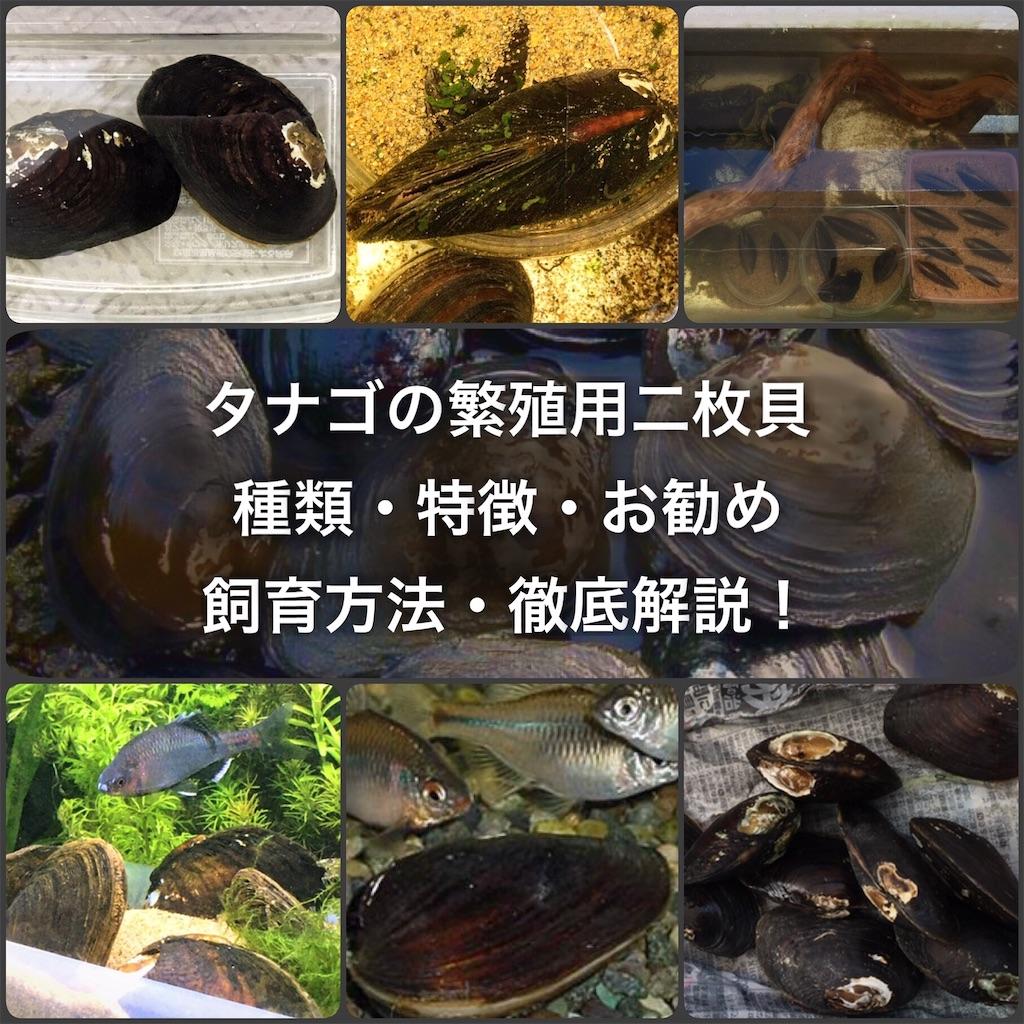 f:id:yumemiraitunagu:20200424073411j:plain
