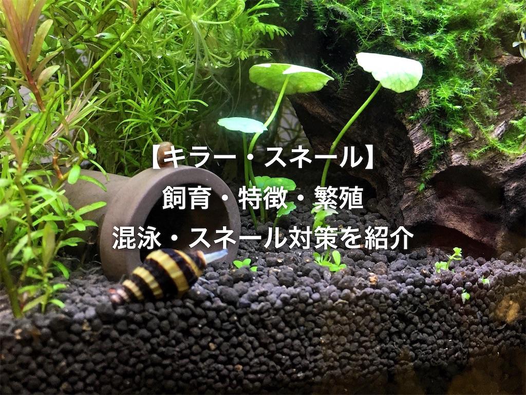 f:id:yumemiraitunagu:20200426212949j:plain