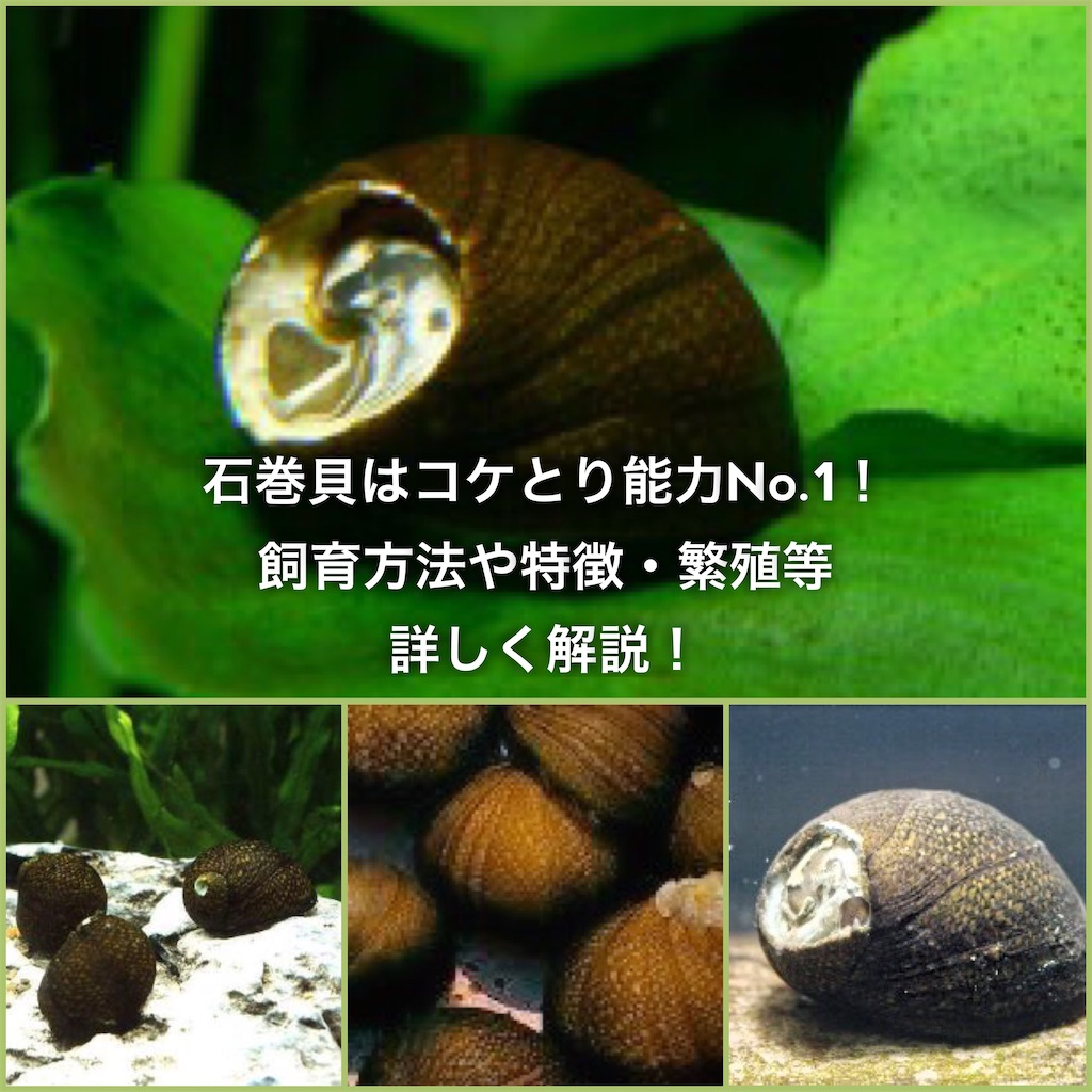 f:id:yumemiraitunagu:20200430233622j:plain